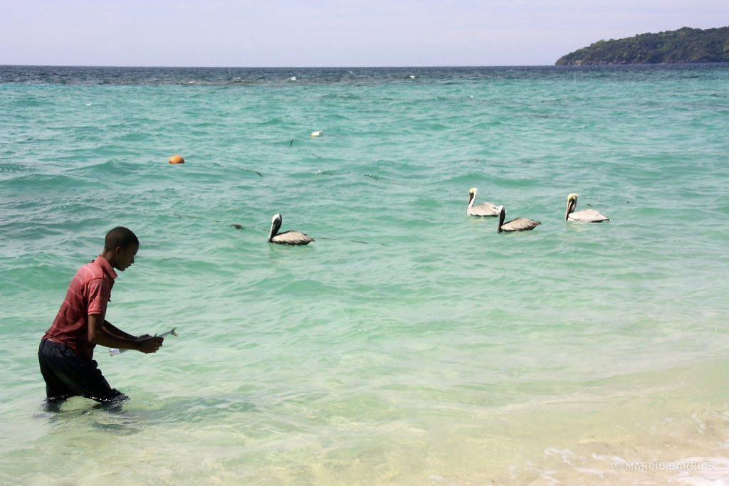 Garifuna boy feeding a group of pelicans in Chachauate