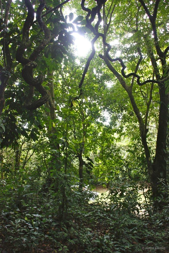 Pico Bonito forest