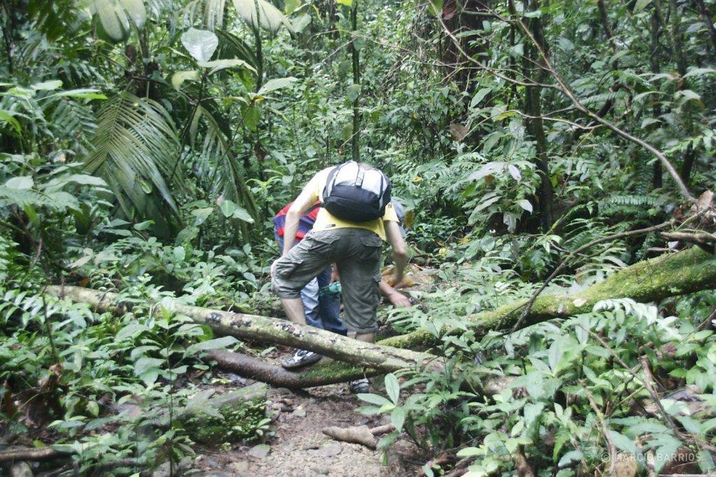 Pico Bonito trail