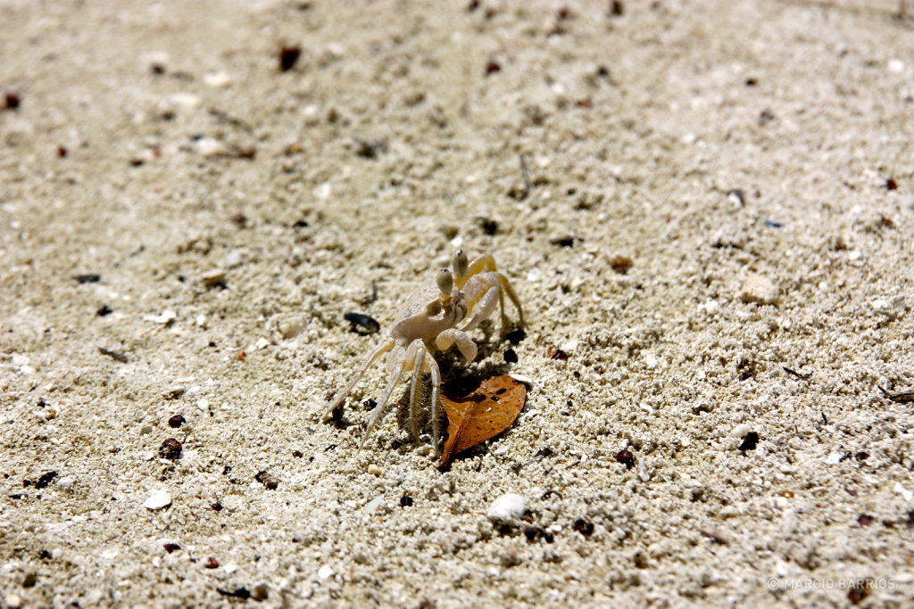 Small crab in Bando beach