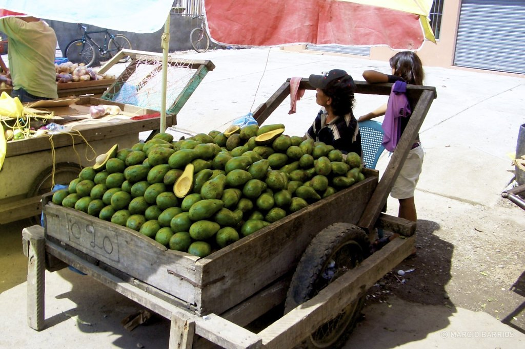 Street vendor selling avocados